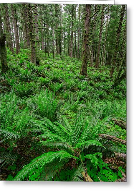 Forest Floor Photographs Greeting Cards - Ecola Ferns Greeting Card by Rick Berk