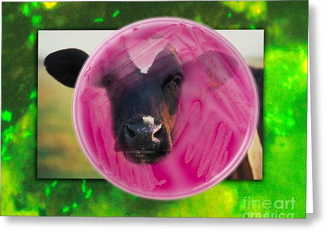 Germ Greeting Cards - E coli Greeting Card by George Mattei