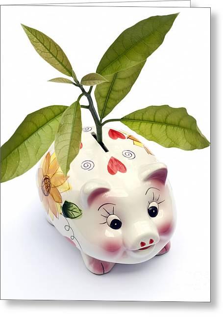 Piglets Greeting Cards - Ecological savings Greeting Card by Sinisa Botas