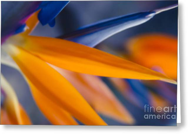 Strelitzia Greeting Cards - Ecstatic Motion Greeting Card by Sharon Mau