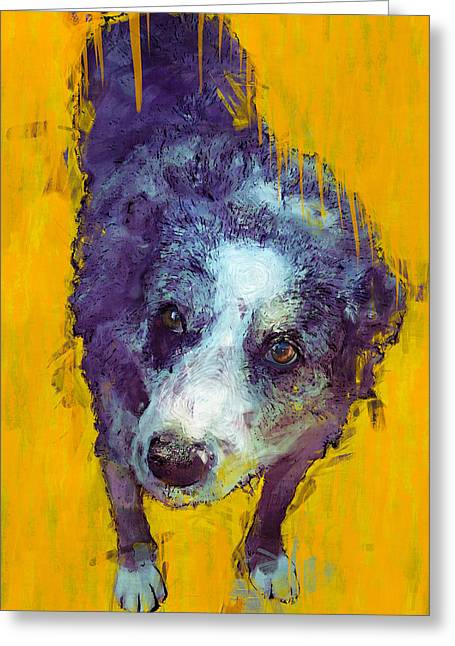 Kelpie Paintings Greeting Cards - Eddie Greeting Card by Carl Rolfe