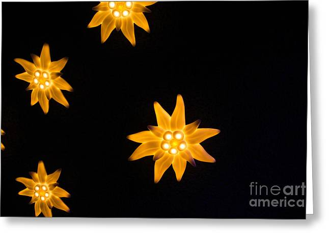 Swiss Photographs Greeting Cards - Bloom Greeting Card by Stephen Allen