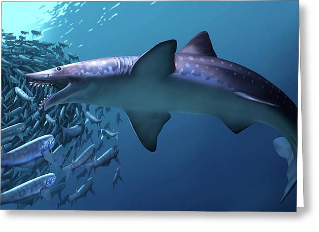 Edestus Giganteus Shark Greeting Card by Jaime Chirinos