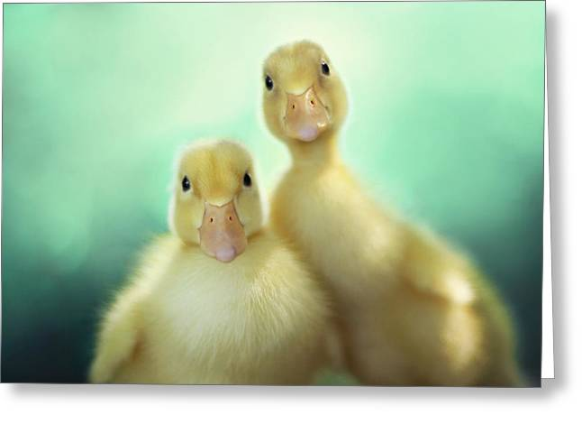 Duck Greeting Cards - Edgar and Sally Greeting Card by Amy Tyler