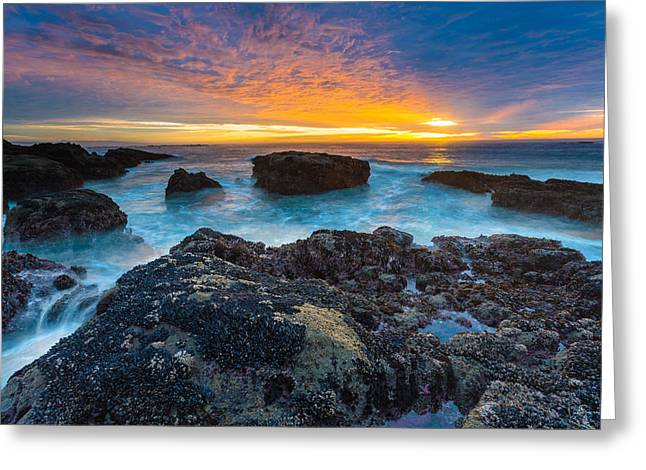 Orange Starfish Greeting Cards - Edge of America II Greeting Card by Robert Bynum