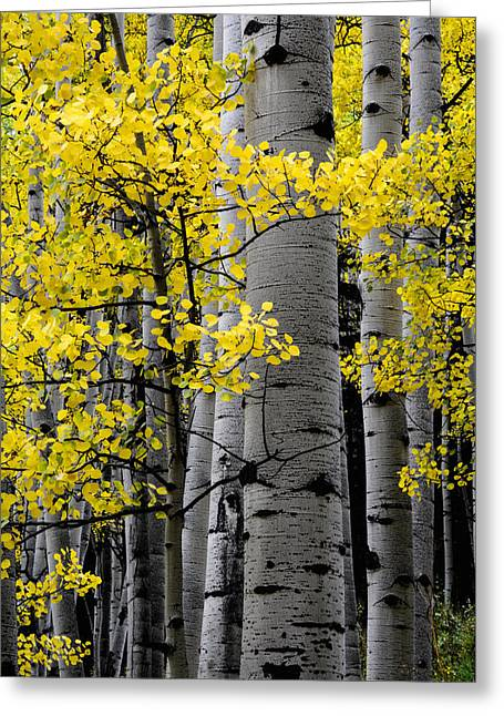 Late Fall Season Greeting Cards - Edge of Night Greeting Card by The Forests Edge Photography - Diane Sandoval