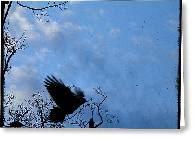 Crows In Trees Greeting Cards - Edge Of The Sky Greeting Card by Gothicolors Donna Snyder