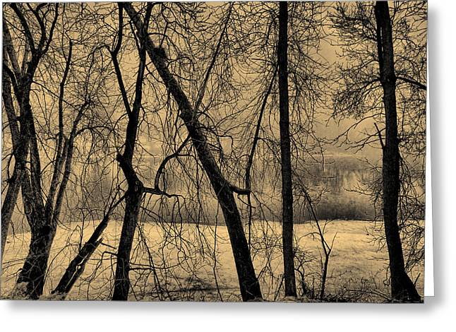 Edge Of Winter Greeting Card by Bob Orsillo