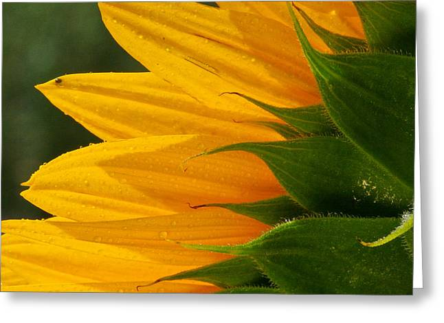 Inflorescence Greeting Cards - Edge work Greeting Card by Jean Noren
