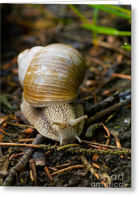 Edible Greeting Cards - Edible Snail Greeting Card by Steen Drozd Lund