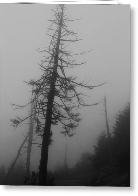 Misty Pine Photography Greeting Cards - Eerie Morning  Greeting Card by Dan Sproul