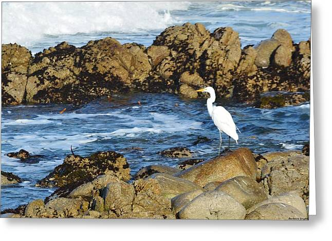 Seabirds Digital Art Greeting Cards - Egert Greeting Card by Barbara Snyder