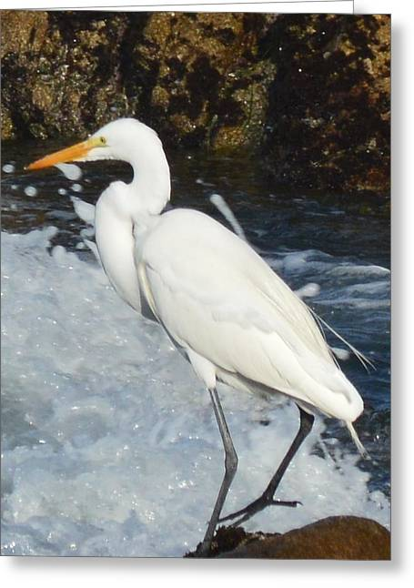 Seabirds Digital Art Greeting Cards - Egert Detail Greeting Card by Barbara Snyder