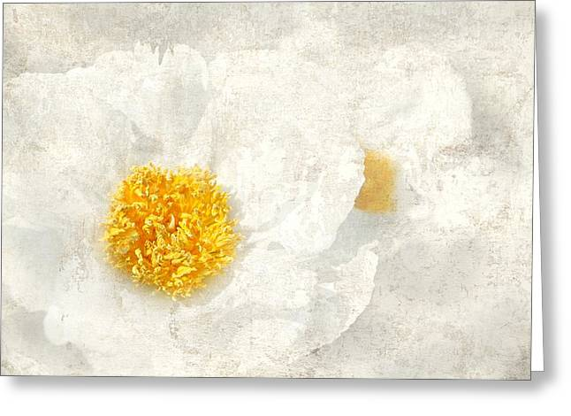 Texture Flower Greeting Cards - Egg Whites Greeting Card by Diana Angstadt