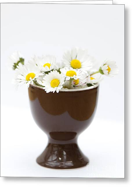 Eggcup Daisies Greeting Card by Anne Gilbert