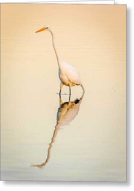 D700 Greeting Cards - Egret at Dusk Greeting Card by Chris Modlin