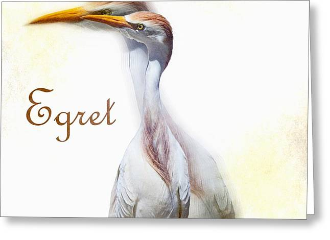 Zoology Greeting Cards - Egret Greeting Card by Barbara Chichester