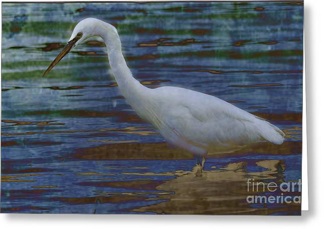 Animals Greeting Cards - Egret By Moonlight Greeting Card by Darren Wilkes