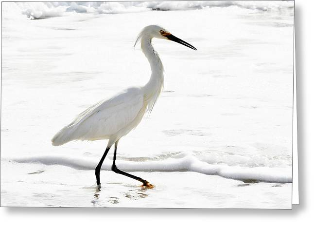 Wadding Greeting Cards - Egret Greeting Card by Camille Lopez