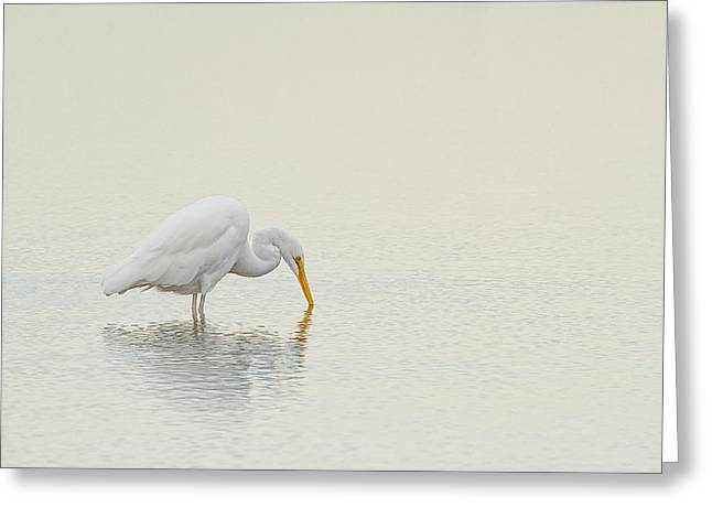 Yellow Beak Greeting Cards - Egret Finds Himself Greeting Card by Karol  Livote