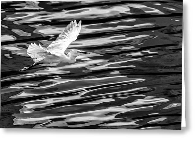 Reflex Greeting Cards - Egret flying  Greeting Card by Ze Maciel