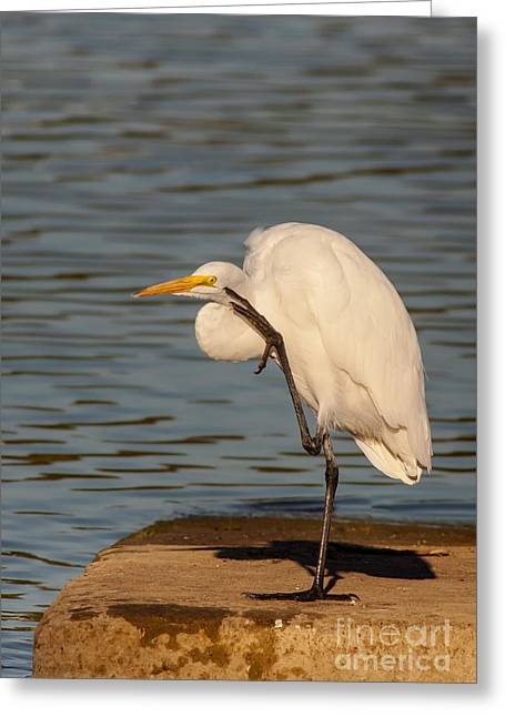 Cabin Window Greeting Cards - Egret Has A Thought Greeting Card by Robert Frederick