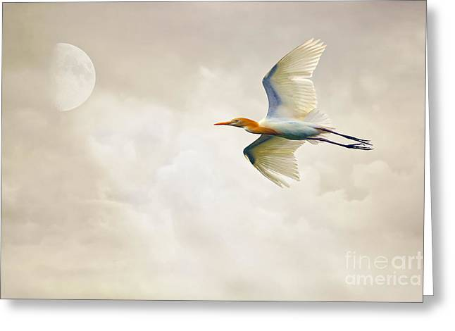 Bird Scape Greeting Cards - Egret In The Sky Greeting Card by Tom York Images