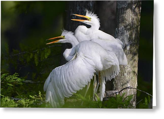Baby Bird Greeting Cards - Egret Nestlings in a Cypress Swamp Greeting Card by Bonnie Barry