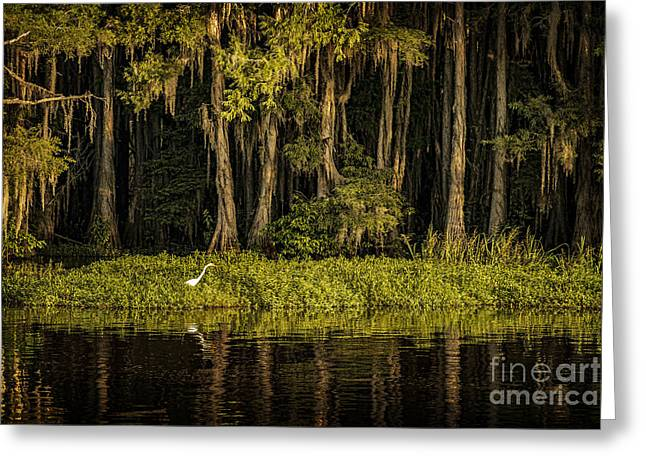 Tamyra Ayles Greeting Cards - Egret on Caddo Lake Greeting Card by Tamyra Ayles
