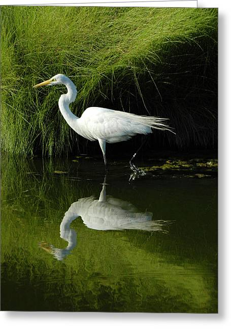 Great Egret Greeting Cards - Egret Reflections Greeting Card by Lara Ellis