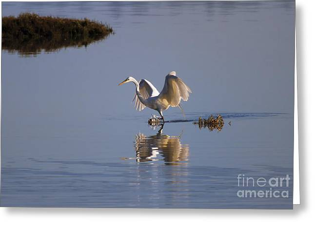 Great Egret Greeting Cards - Egret Reflections Greeting Card by Mike  Dawson