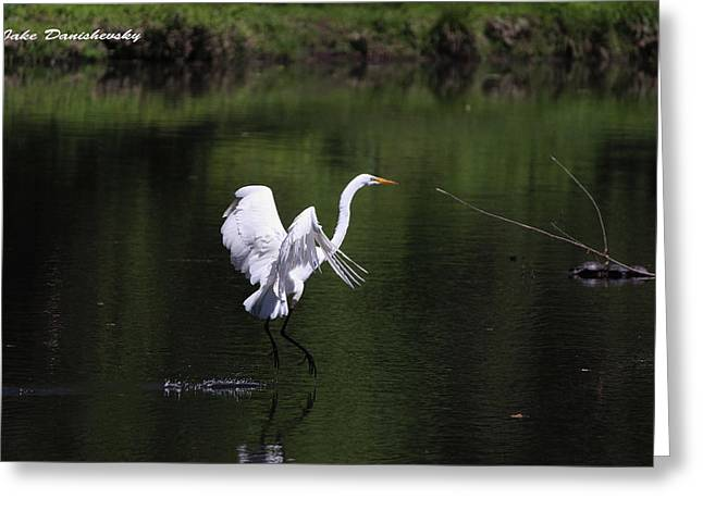 Prancing Bird Greeting Cards - Egret Water Ballet Greeting Card by Jake Danishevsky