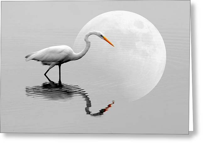 Egret With Moon  Greeting Card by Diana Angstadt