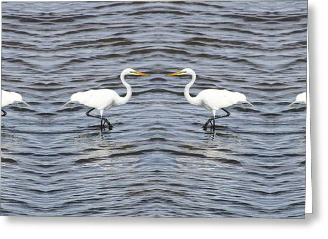 Water Fowl Greeting Cards - Egrets Dancing Greeting Card by Cathy Lindsey