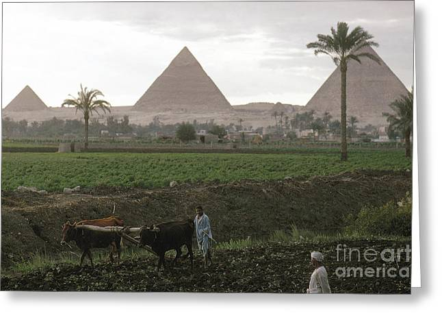 African Heritage Greeting Cards - EGYPT: FARMING, c1970 Greeting Card by Granger