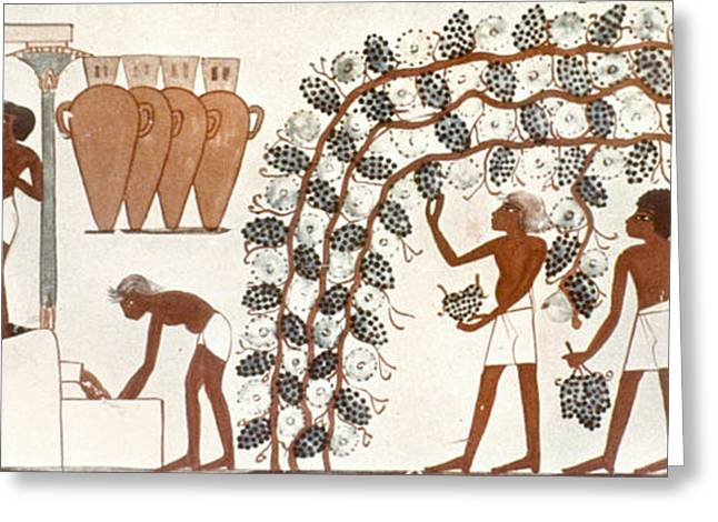 Egypt Grape Pressing Greeting Card by Granger