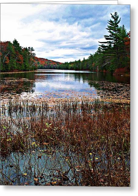Green And Yellow Greeting Cards - Egypt Pond Greeting Card by Joy Nichols