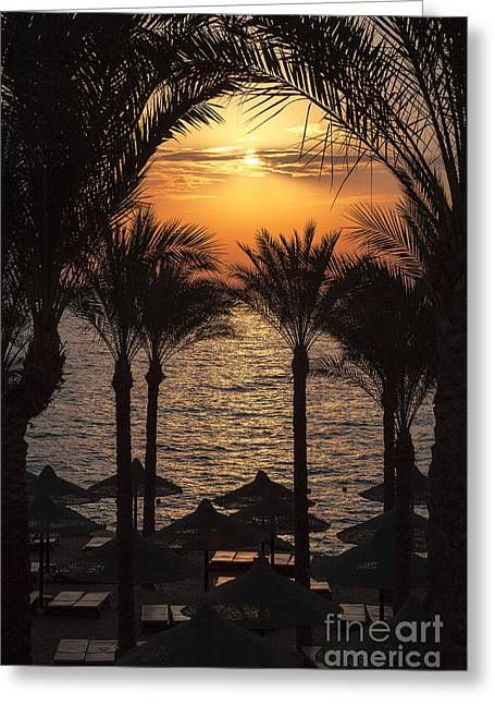Umbrellas Greeting Cards - Egypt sunrise Greeting Card by Jane Rix