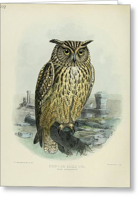 Owl Greeting Cards - Egyption Eagle Owl Greeting Card by J G Keulemans