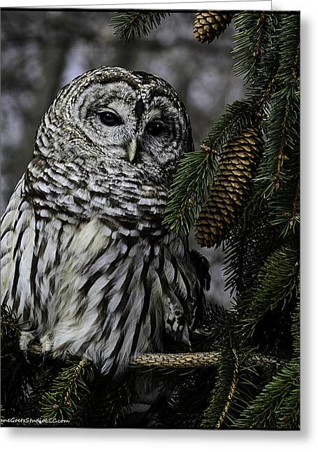 Eight Hoots From The Pine Cone Perch Greeting Card by LeeAnn McLaneGoetz McLaneGoetzStudioLLCcom
