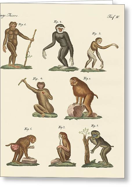 Orang-utans Greeting Cards - Eight kinds of monkeys Greeting Card by Splendid Art Prints