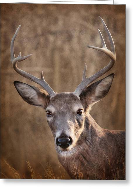 Rack Greeting Cards - Eight Pointer Greeting Card by Lori Deiter