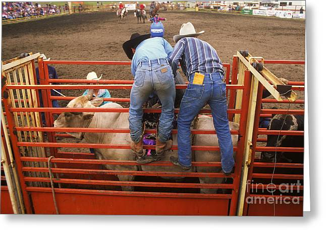Bull Riding Greeting Cards - Rodeo Eight Seconds To Payday Greeting Card by Bob Christopher