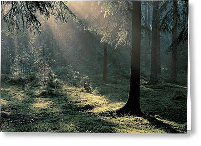 Moss-covered Greeting Cards - Ekero Uppland Sweden Greeting Card by Panoramic Images