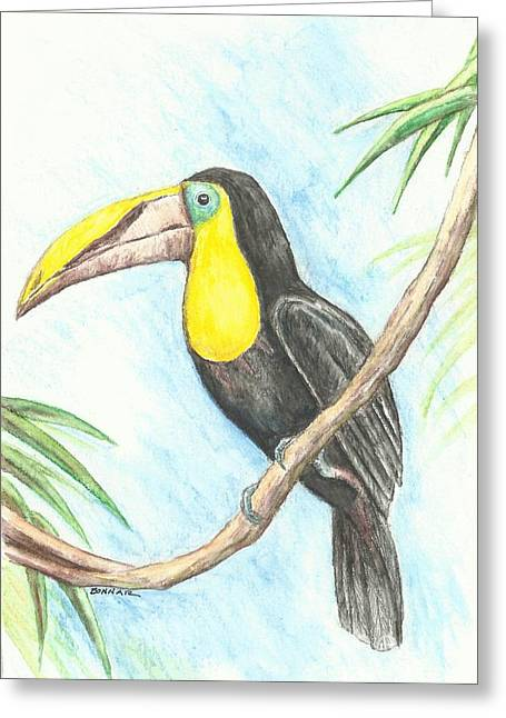 Riverwalk Drawings Greeting Cards - El Tropicano Toucan Greeting Card by Sue Bonnar