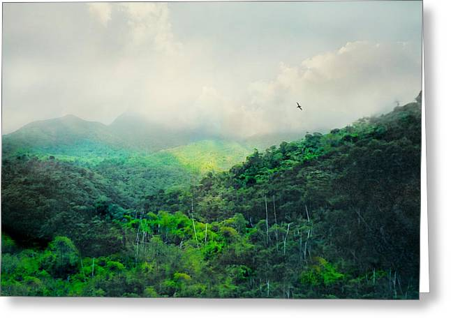 Yunque Greeting Cards - El Yunque National Rain Forest Greeting Card by Diana Angstadt