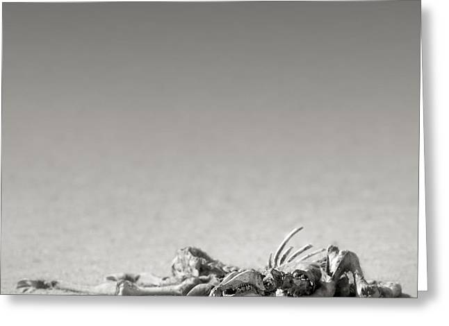 Sand Art Greeting Cards - Eland skeleton in desert Greeting Card by Johan Swanepoel