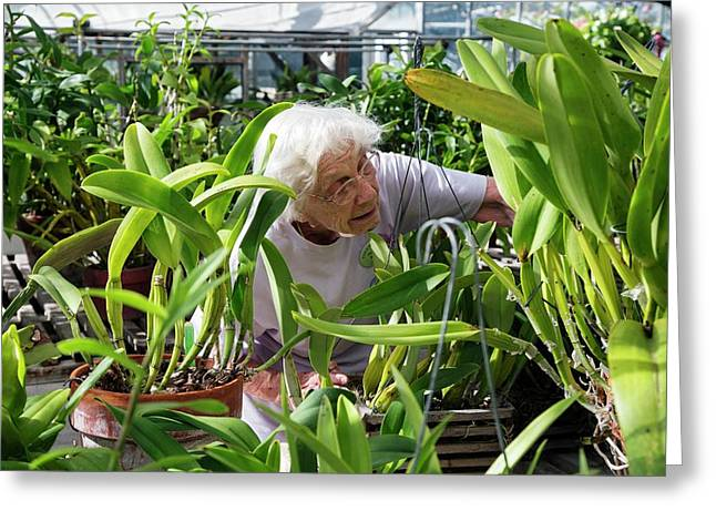 Elderly Woman Examining Plants Greeting Card by Jim West