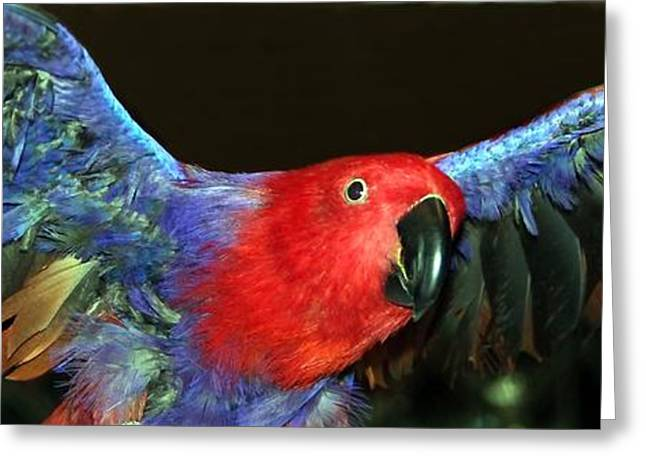 Andrea Lazar Greeting Cards - Electric Eclectus Greeting Card by  Andrea Lazar