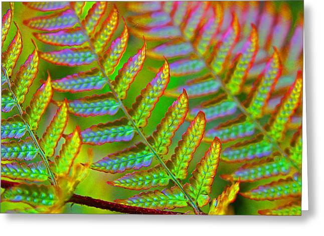 Carolyn Stagger Cokley Greeting Cards - Electric Fern Greeting Card by Carolyn Stagger Cokley